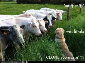 *sniff sniff* wut kinda CLONE yoo warin' ??