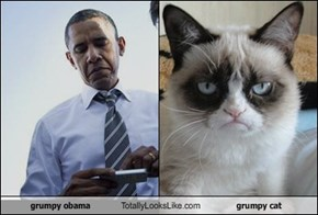 grumpy obama Totally Looks Like grumpy cat