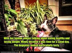 With her human always talking about eating healthy and losing weight, Mindy decided it was time for a salad day. The begonias looked particularly tasty.