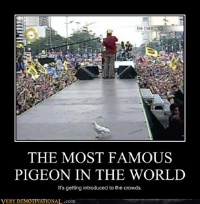 THE MOST FAMOUS PIGEON IN THE WORLD