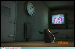 Even penguins are brony