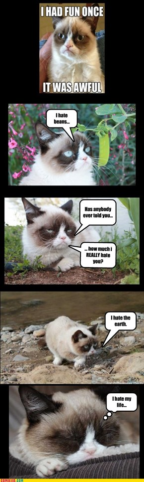The many hated things of Grumpy Cat....