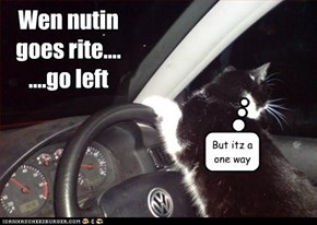 Go Left, Young Cat