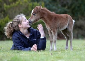 One of the Worlds Smallest Miniature Ponies