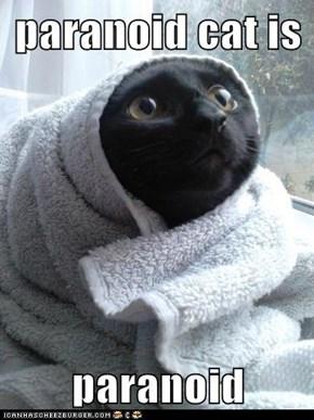 paranoid cat is  paranoid