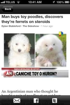 That Ain't No Dog, Dawg