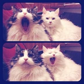Contagious Yawn