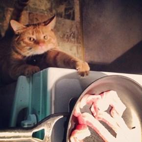 Must... Haz... Bacon...