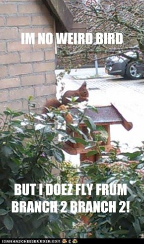 Birdfeeder folk