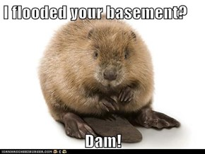 I flooded your basement?  Dam!