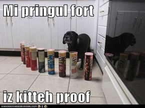 Mi pringul fort  iz kitteh proof