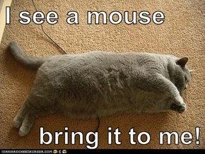 I see a mouse  bring it to me!