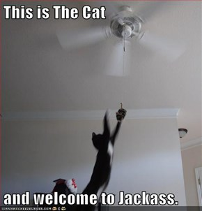 This is The Cat  and welcome to Jackass.