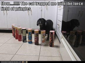 Mom....!!!!! The cat trapped me with the force field of pringles