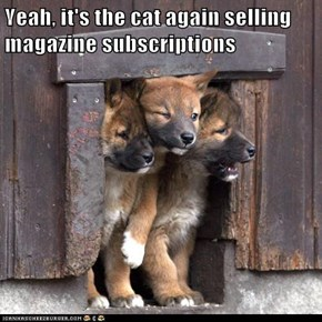 Yeah, it's the cat again selling magazine subscriptions