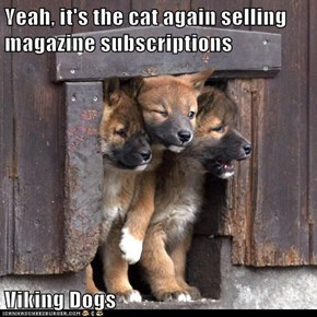Yeah, it's the cat again selling magazine subscriptions  Viking Dogs