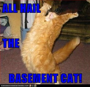 ALL HAIL THE BASEMENT CAT!