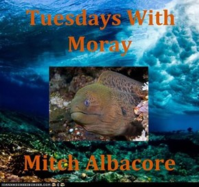 Tuesdays With Moray