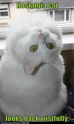 Nostalgia cat  looks back wistfully.