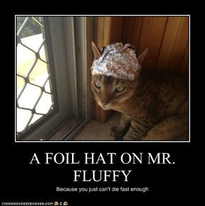 A FOIL HAT ON MR. FLUFFY