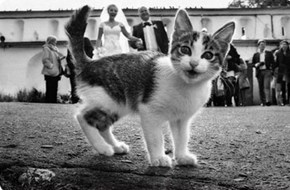 Every Wedding Needs a Kitten