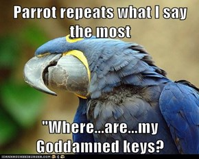 Parrot repeats what I say the most