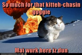 So much for that kitteh-chasin goggie  Mai wurk here iz dun