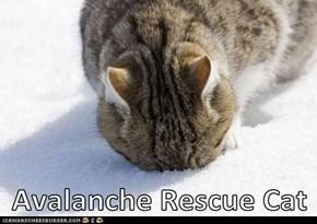 Avalanche Rescue Cat