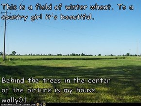 This is a field of winter wheat. To a country girl it's beautiful.  Behind the trees in the center         of the picture is my house.     wally01