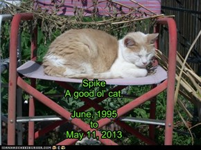 Spike A good ol' cat.  June, 1995 to May 11, 2013