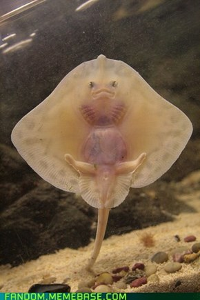 Baby Stingray OR Lady Cassandra?