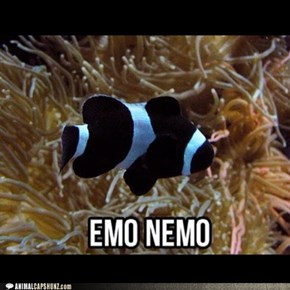 finding emo nemo