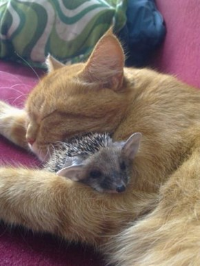 7 Cats With Their Special Friends