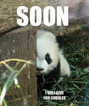 Very Soon