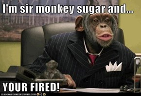 I'm sir monkey sugar and...  YOUR FIRED!