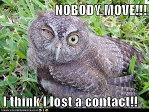 NOBODY MOVE!!!  I think I lost a contact!!