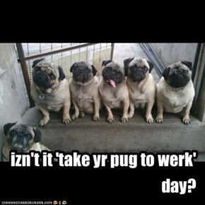 izn't it 'take yr pug to werk' day?