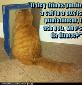 """If dey thinks puttin                       a cat in a box is                                                     punishment, I                                                      ask you, who's                                                       da du"