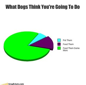 What Dogs Think You're Going To Do