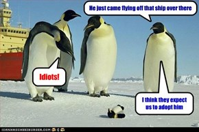 Penguins are less gullible than you think