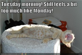 Tuesday morning! Still feels a bit too much like Monday!