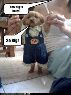 How big is baby?