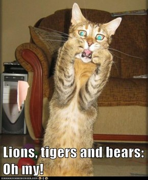 Lions, tigers and bears: Oh my!
