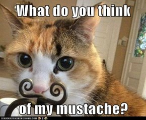 What do you think  of my mustache?