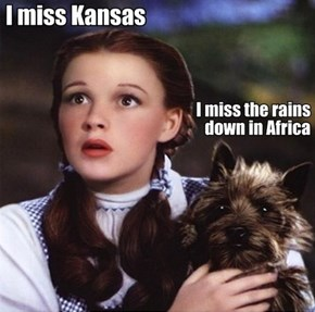Oh, Toto...