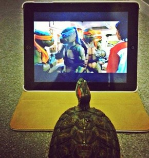 The Perfect Entertainment for Turtles