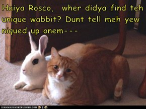 Haiya Rosco,  wher didya find teh unique wabbit? Dunt tell meh yew niqued up onem---