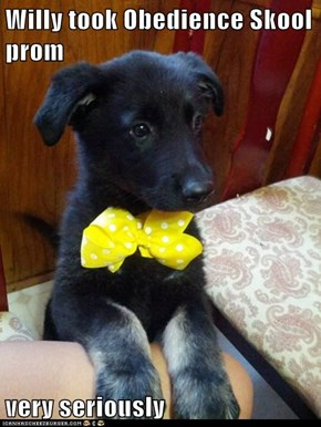 Willy took Obedience Skool prom  very seriously