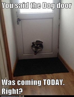 You said the Dog door  Was coming TODAY. Right?