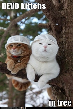 DEVO kittehs  in tree